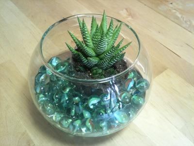 Cómo hacer un centro de mesa con cactus y pecera | facilisimo.com