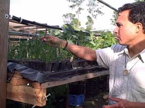 DIY Homemade Hydroponic Vertical Garden and Urban Farm in South Florida