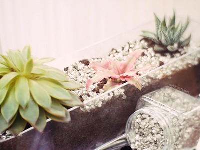 DIY Terrarium (How to care for succulents) | Nekkoart