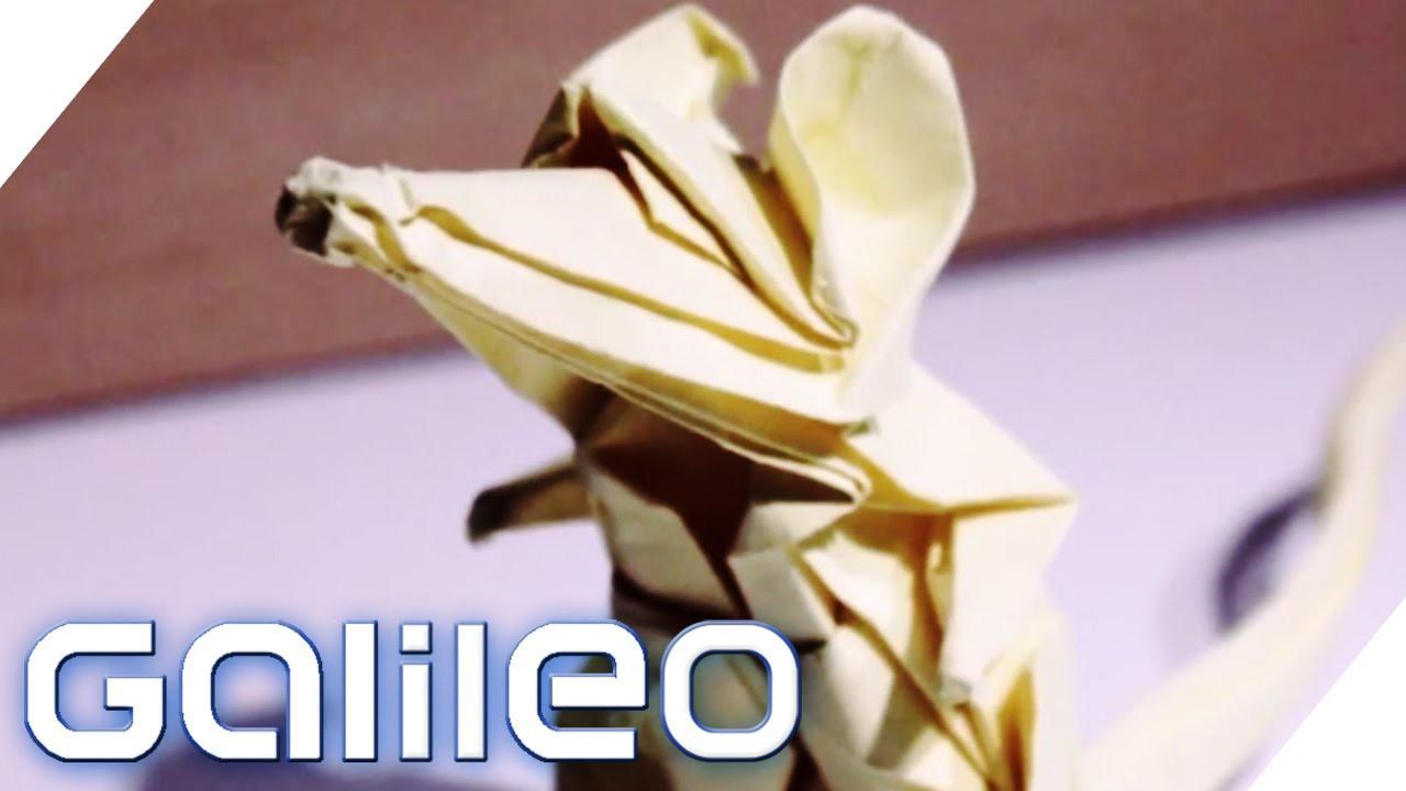 Origami eXtrem | Galileo | ProSieben