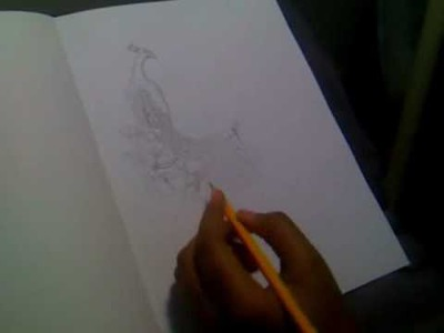 Me drawing a Peacock