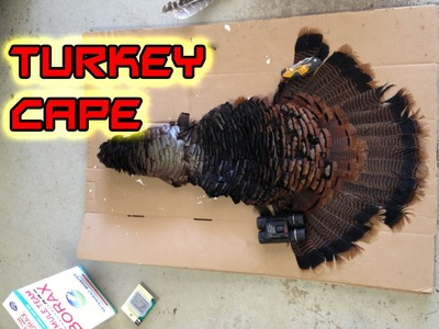 DIY How To Make A Turkey Cape Mount For Under $5