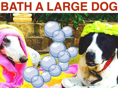 BATH & WASH A LARGE SHORT HAIR DOG- DIY Dog Hygiene Grooming - a tutorial by Cooking For Dogs