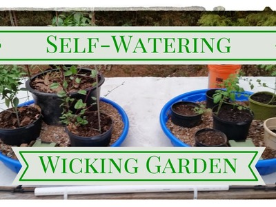 DIY Self Watering Wicking Garden