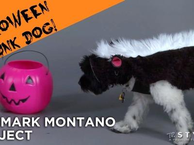 SKUNK DOG COSTUME DIY!