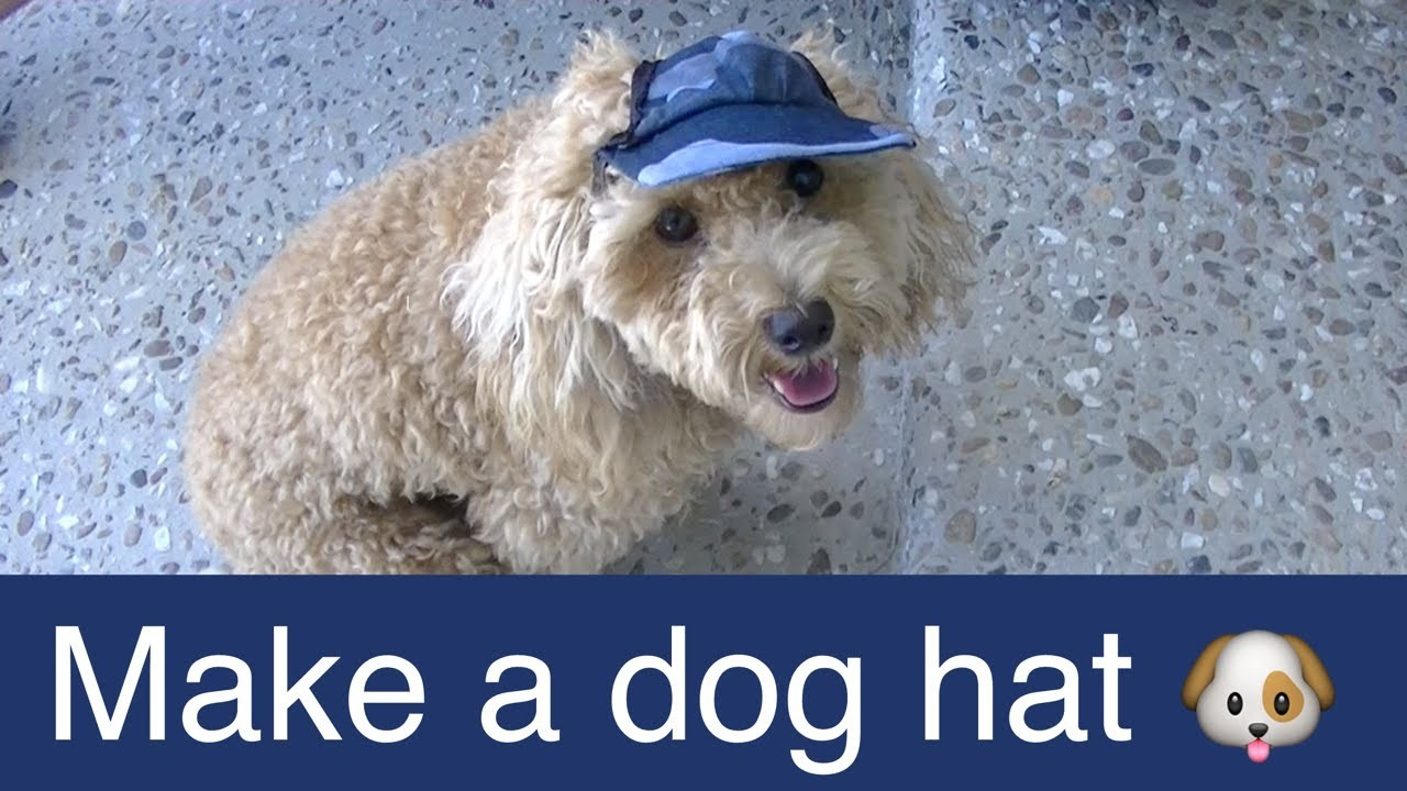 Make Dog Visor Hat-Cap-DIY Dog Food.Groom.Clothes - a tutorial by Cooking For Dogs