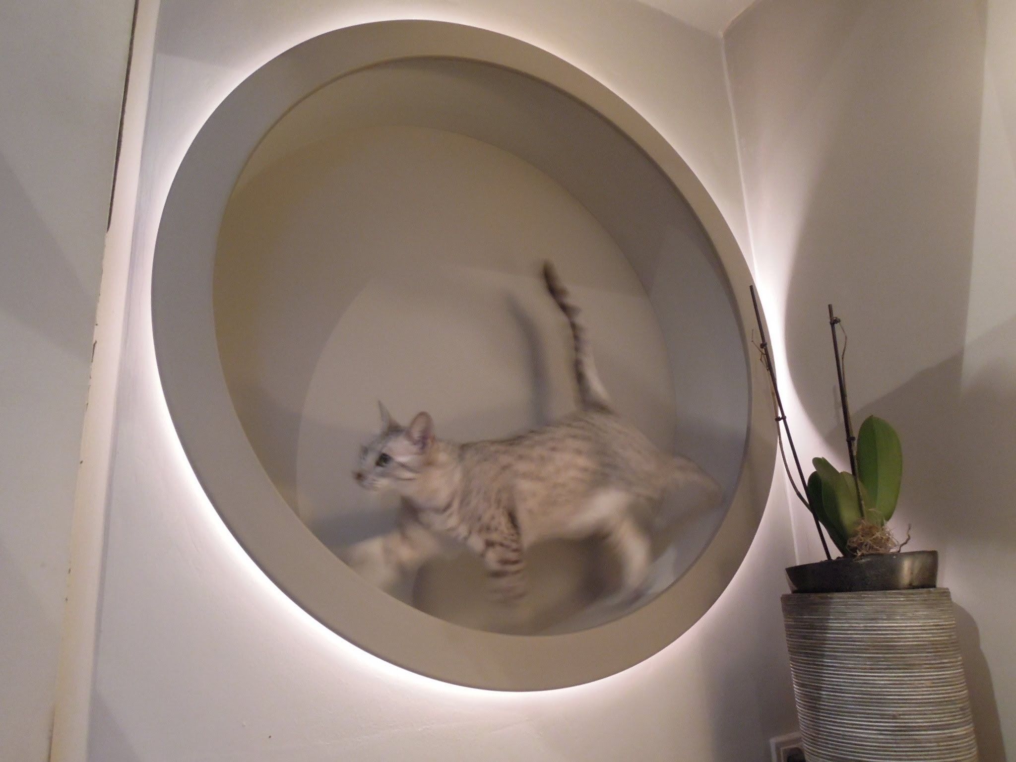 Homemade DIY cat wheel (and also designlight)