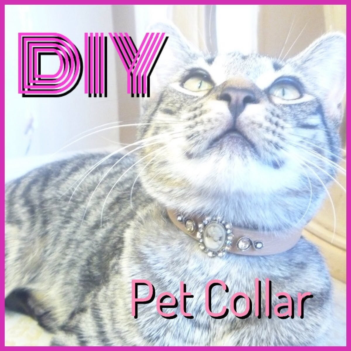 DIY How to make a collar for your pet