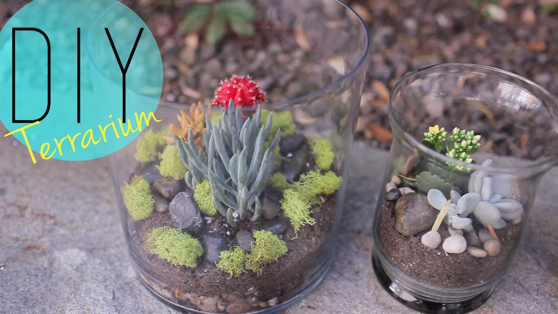 DIY Indoor Garden - Cactus Terrarium {How to} by ANNEORSHINE