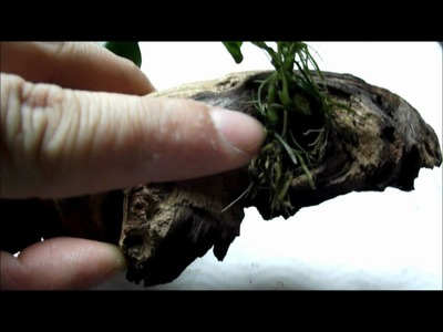 How To: Attach Plants To Driftwood