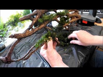DIY Aquarium Moss Wall using wood