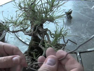 How to Bonsai - Wire Removing
