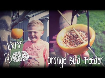 HOW TO FEED BIRDS | DIY Dad: epoddle