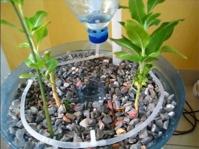 PET Bottle Aquaponics System , A Beginner How to Video on DIY Crafts and Recycling Ideas