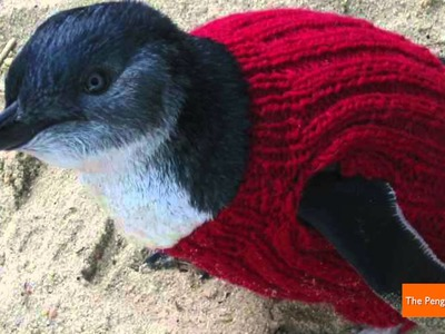 Adorable Penguin Sweaters Save Birds Trapped in Oil Spills
