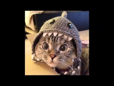 Tom Cat's Handmade Crochet Shark Hat