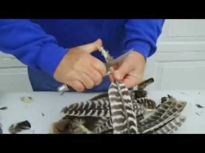 Wild Turkey Hunting; video 10 of 11 Processing a whole wing