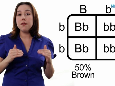 Learn Biology: How to Draw a Punnett Square