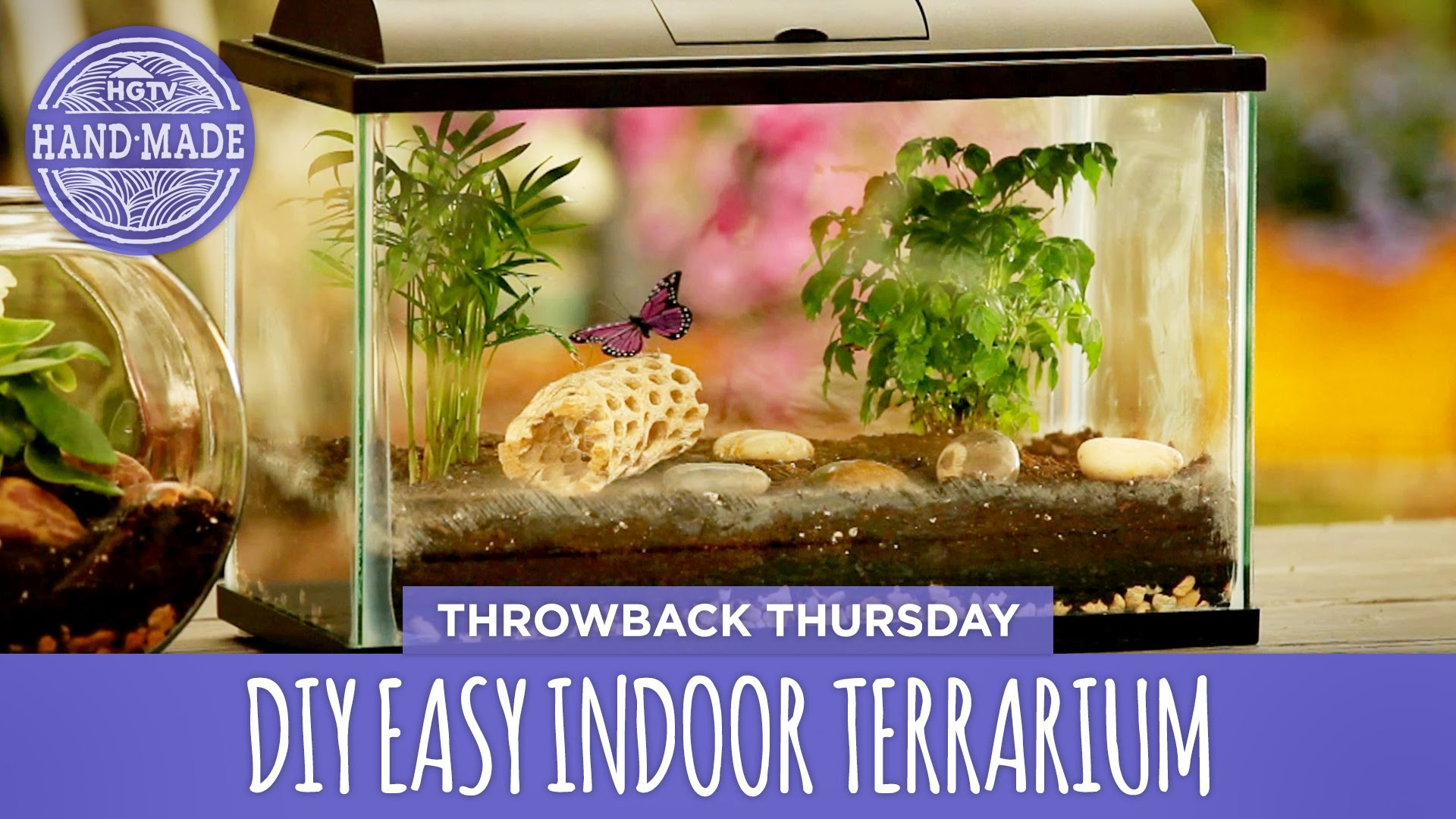 DIY Easy Indoor Terrarium - Throwback Thursday - HGTV Handmade