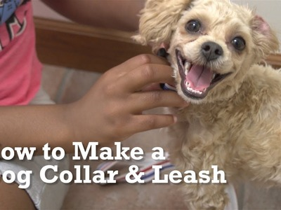 How to Make a Dog Collar & Leash