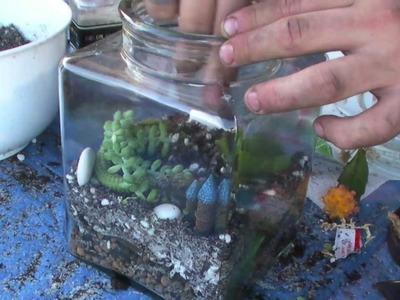 How to: Succulent Terrarium