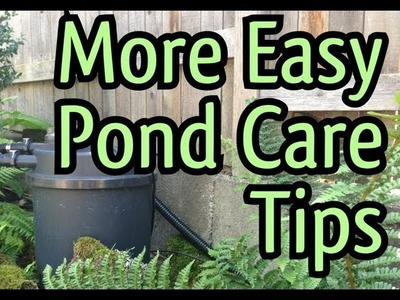 Easy Fish Pond Maintenance Tips : How To Clean a POND FILTER without getting your hands dirty