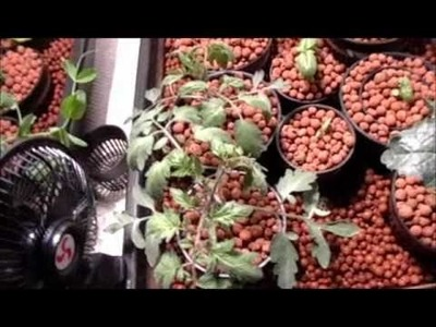 Solar Powered Indoor Hydroponic Tomato & Vegetable Garden