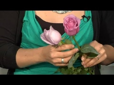 What Is the Difference With Regular Lavender Roses & Sterling Roses? : Floral Tips & Ideas