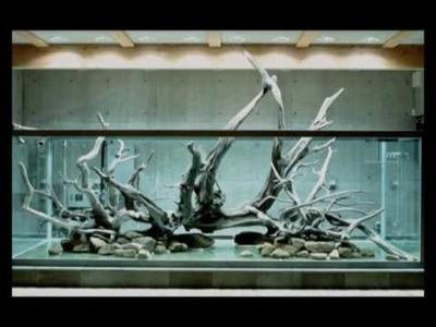 Amano Aquarium in making.