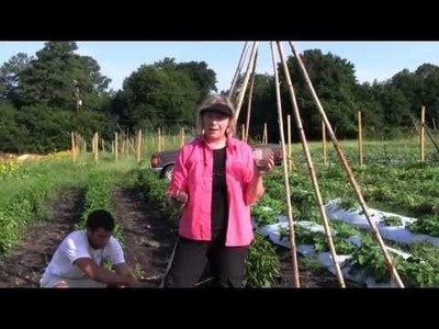 How to Grow a Green Bean Teepee