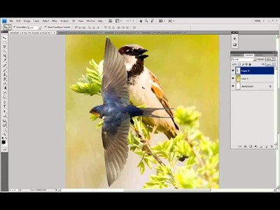 Selections & Masking in Photoshop