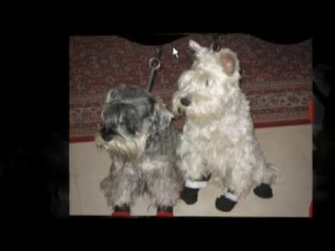 Comfy Dog Booties