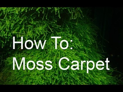 How to: moss carpet!