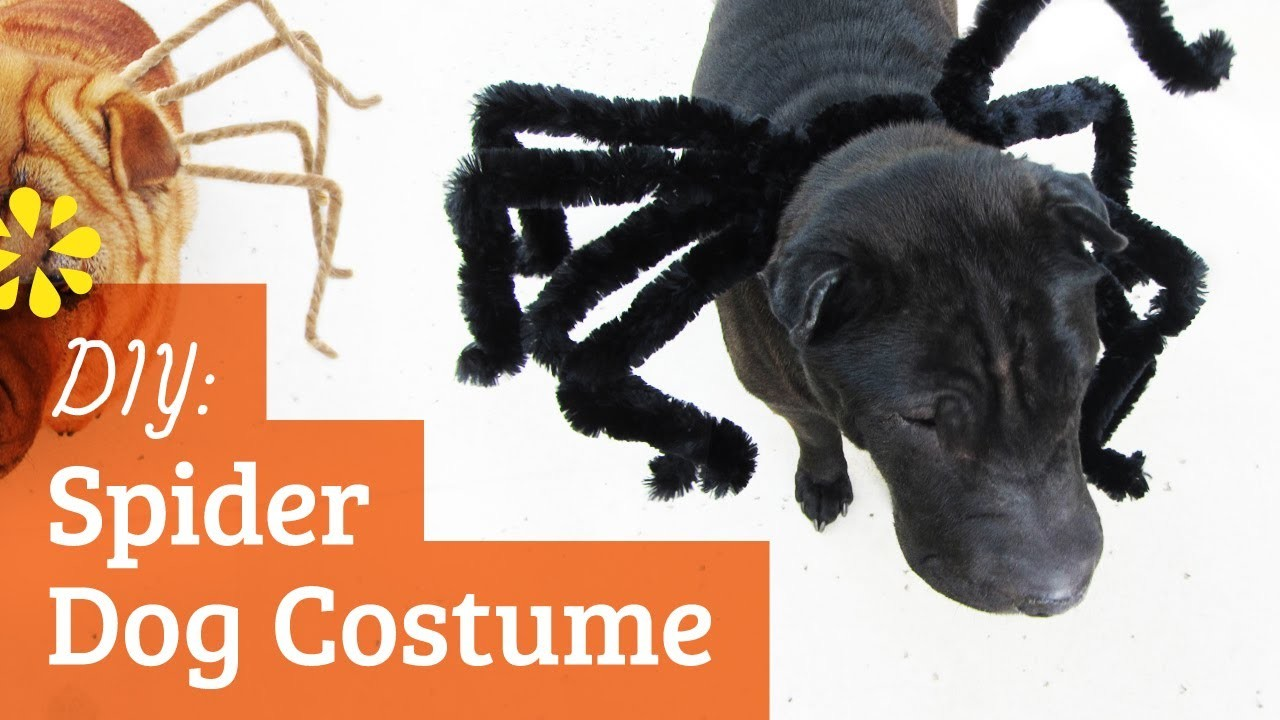 Spider Dog Costume : Halloween Tricks and Treats