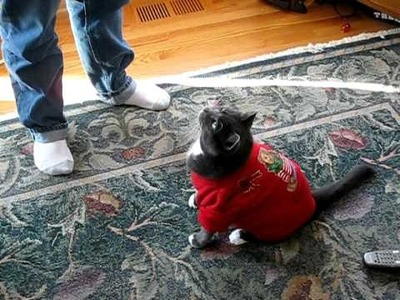 Oscar the cat Christmas Sweater