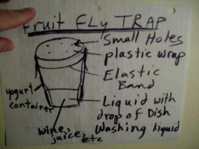 Fruit fly trap difficult problem simple solution comedy bedbug bed bug powder SNL bulldog lipstick