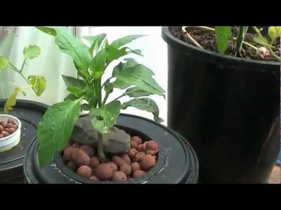 Hydroponics for Beginners,Easy DIY System