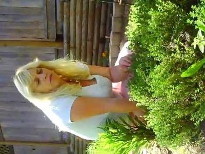 Lemon thyme in the Herb Garden