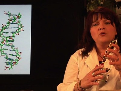 DNA Structure & Testing : How to Make a DNA Model