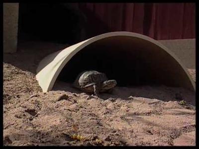 How To Create A Turtle Habitat