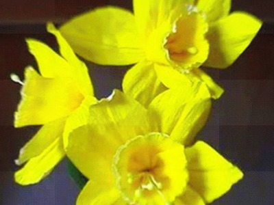 How to make paper flower - Daffodils. Narcissus