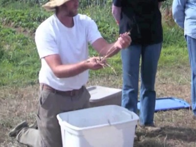 How to Harvest Grains on a Small Scale