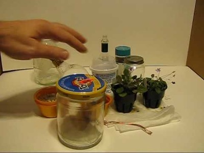 How to make a Micro Terrarium