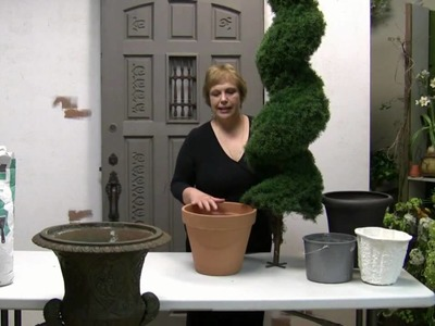 How To Pot A Spiral Topiary For Outdoor Or Indoor Use