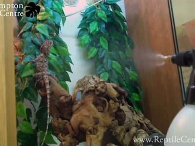 Pro-Rep Pressure Sprayer being used on chameleons and frilled dragon