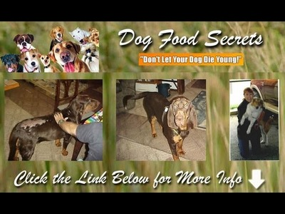 Dog Food Secrets the Dog Food Industry Hides