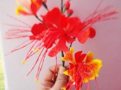 Paper Flower - Pride of Barbados, Dwarf Poinciana