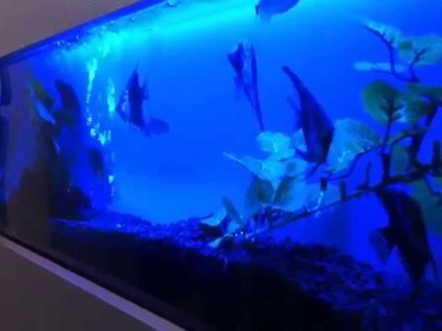 Wall Aquariums - Fish Aquariums Mounted On A Wall