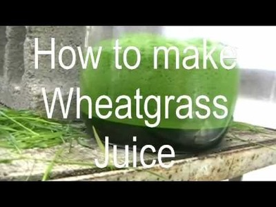 Episode 5 How to make wheatgrass juice, or Juicing wheat in the greenhouse :)