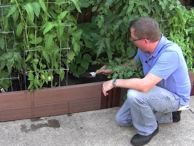How to garden: Starting a Vegetable Garden